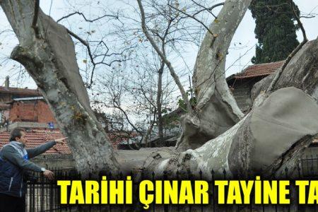 Tarihi Çınar'ın kaderi tayine takıldı