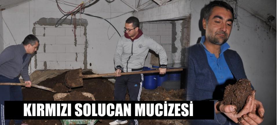 solucan