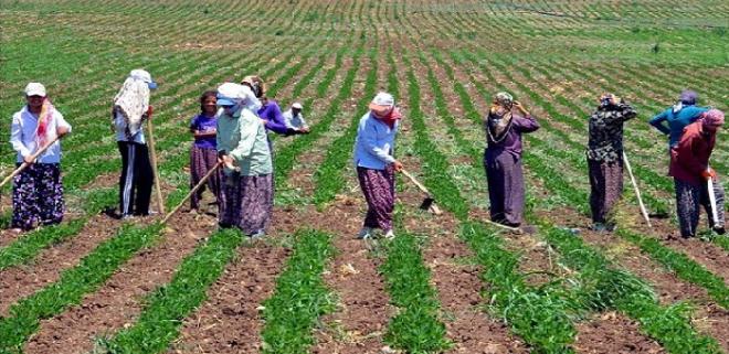 Tarım işçilerinin günlük ücretlerine zam yapıldı