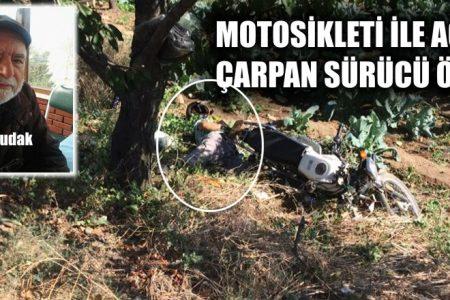 Ağaca çarpan sürücü hayatını kaybetti