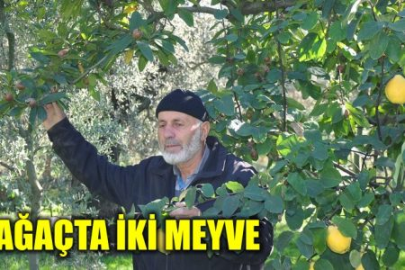 Bir ağaçta iki meyve