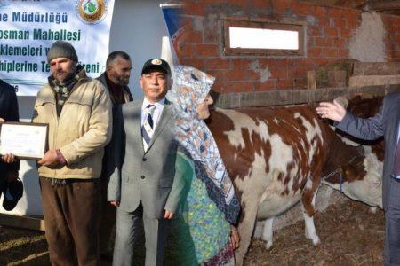 Süt sığırları teslim edildi