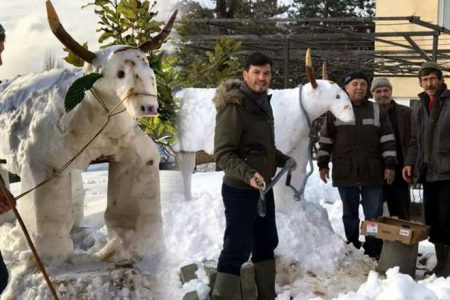 Buda kardan inek