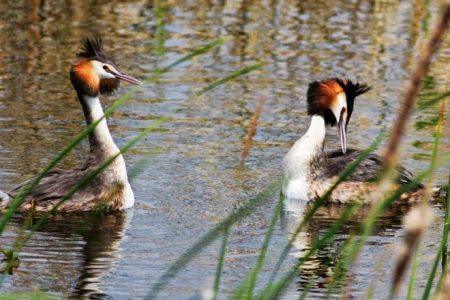 İznik gölü ve diğer göllerde kuş sayımı yapıldı 17 tür var